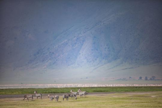 TZ Tansania The Manor at Ngorongoro - landscape & wildlife - herd of zebra on the plains of the crater (c) Silverless-2