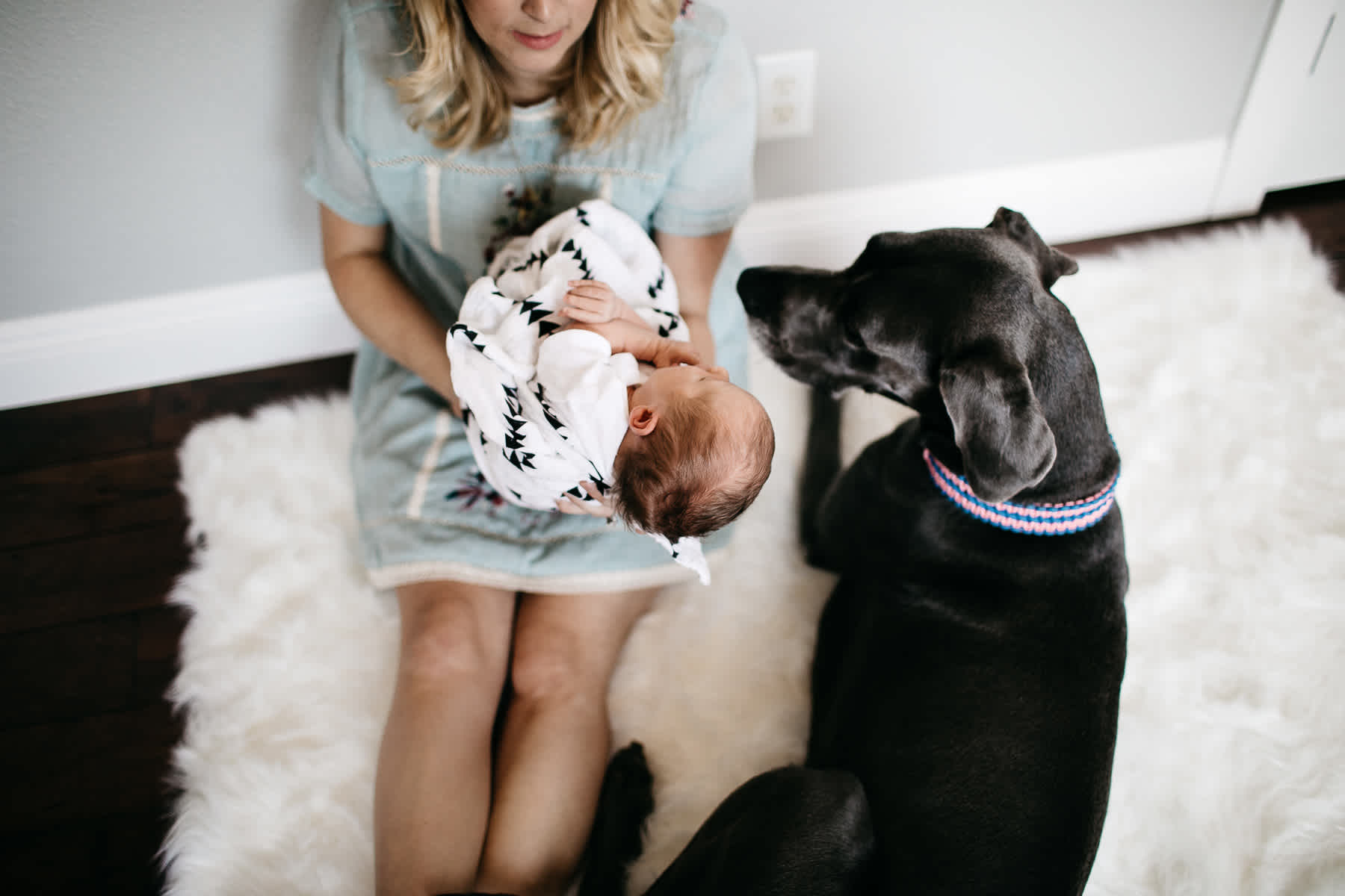 in-home-lifestyle-newborn-with-great-dane-dog-21