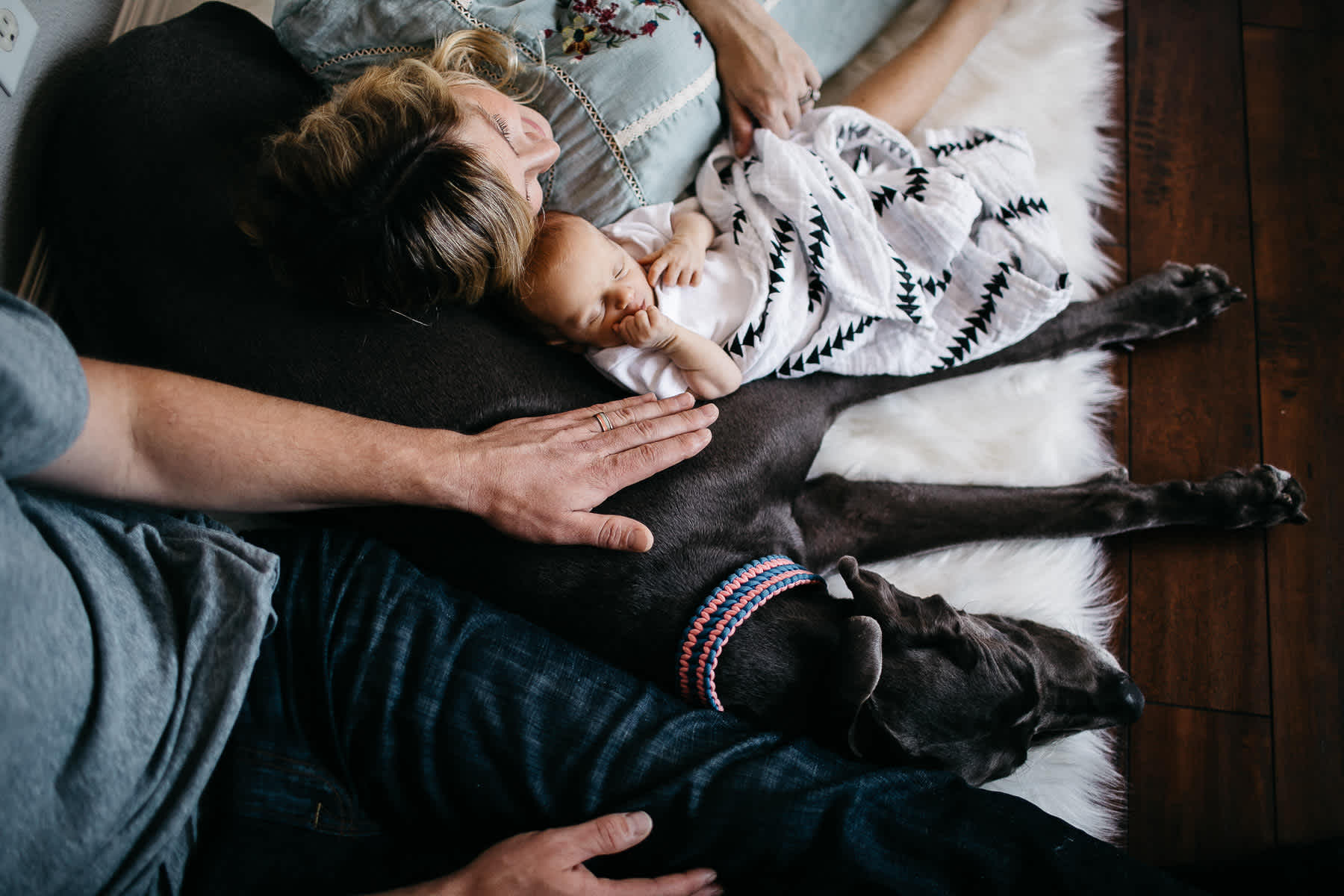 in-home-lifestyle-newborn-with-great-dane-dog-31