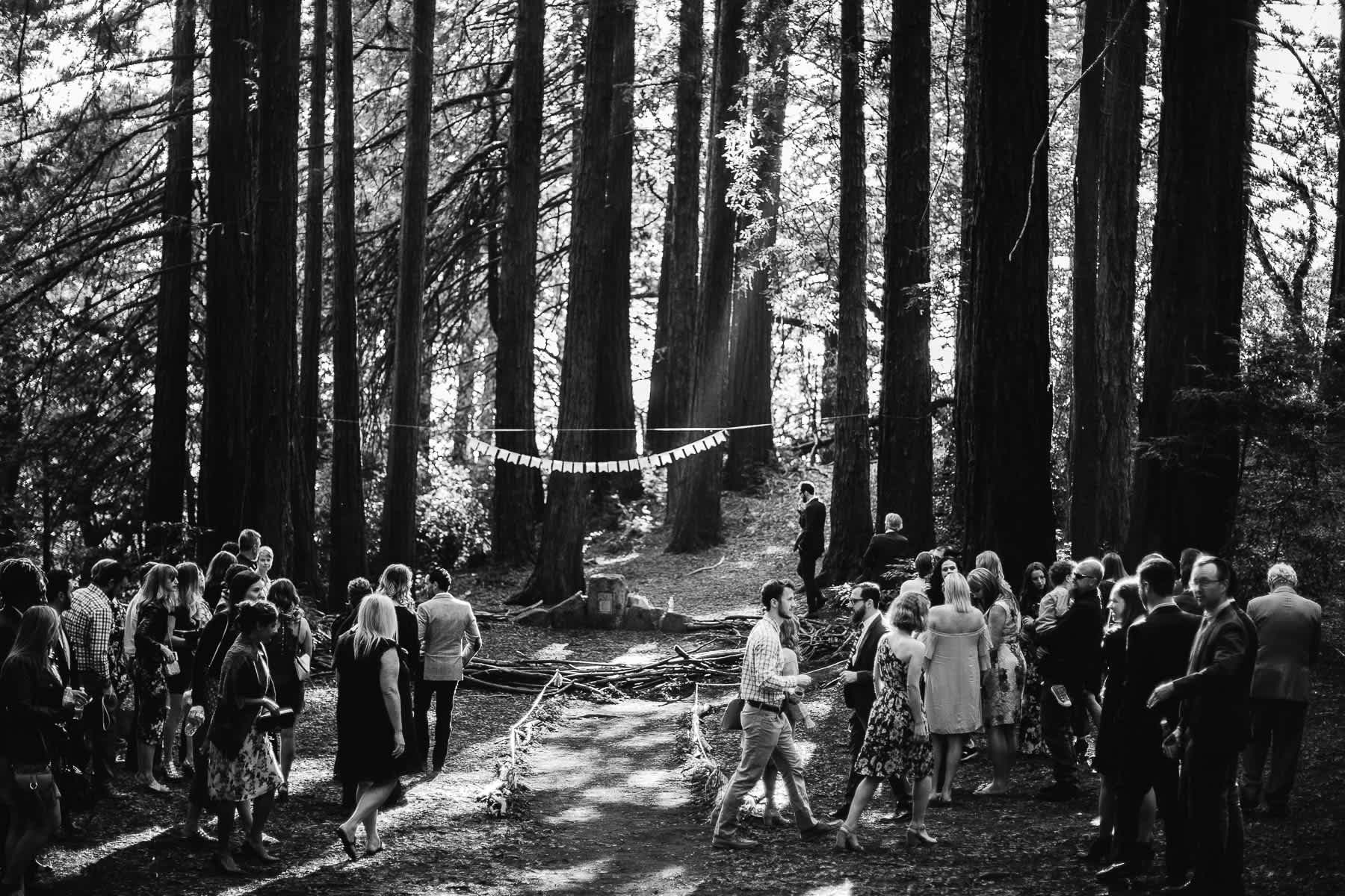 oakland-redwoods-summer-wedding-36