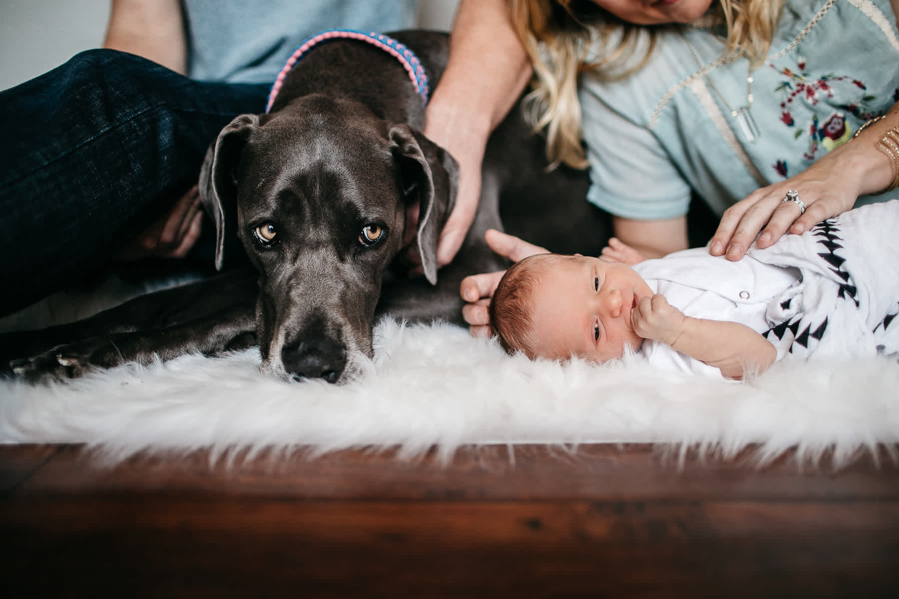 in-home-lifestyle-newborn-with-great-dane-dog-16