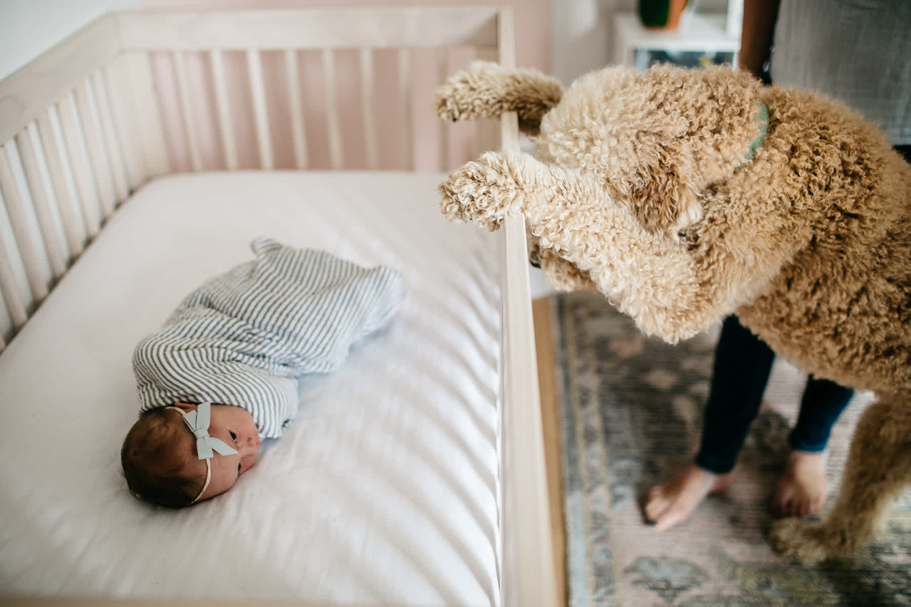 san-francisco-lifestyle-in-home-newborn-with-dog-70
