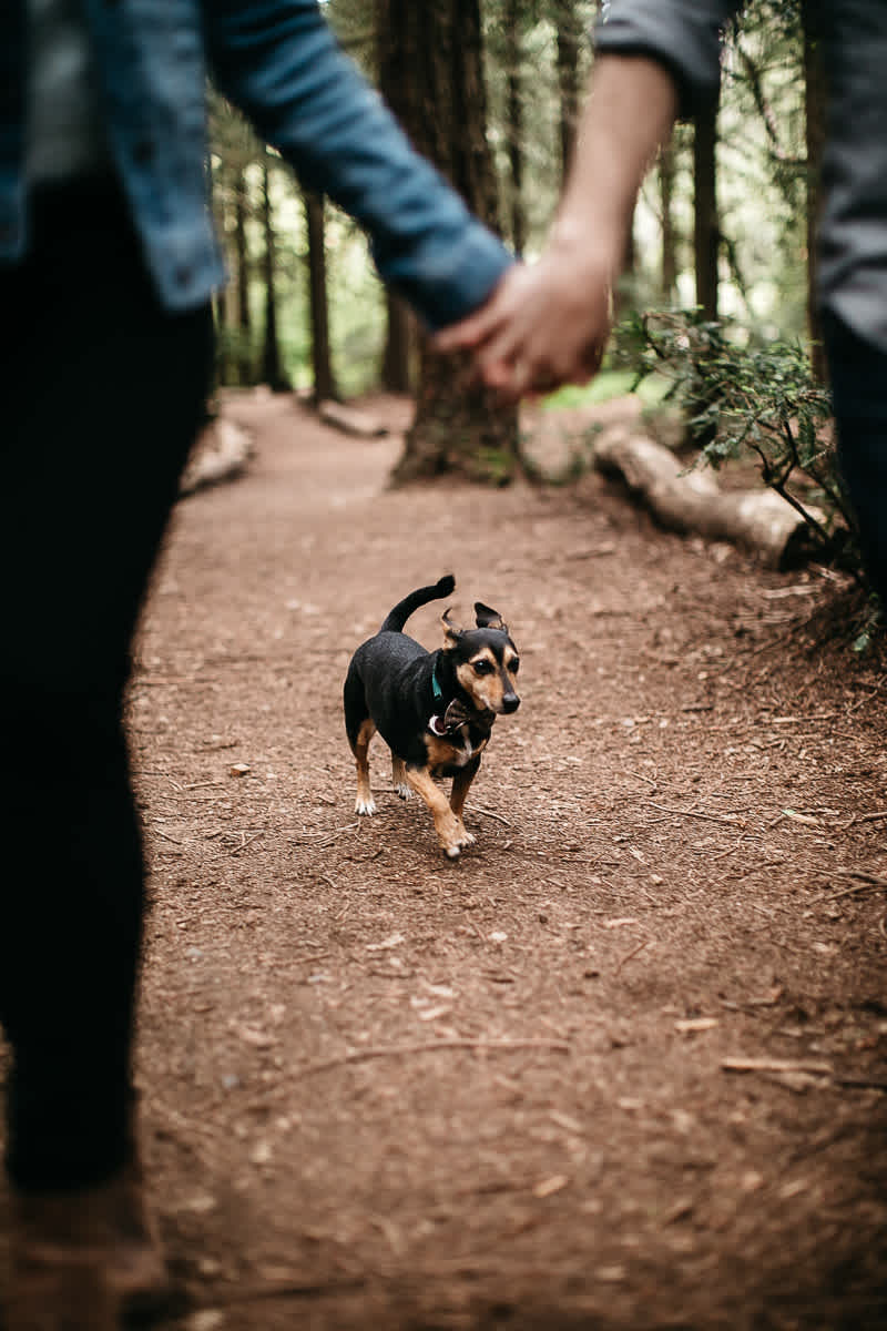 oakland-gloomy-redwood-engagement-session-with-puppy-25