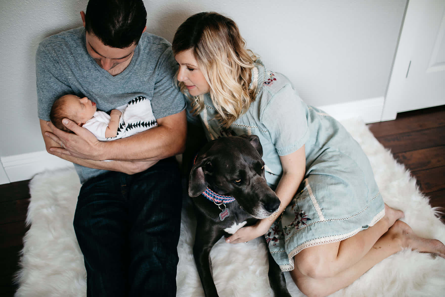 in-home-lifestyle-newborn-with-great-dane-dog-24
