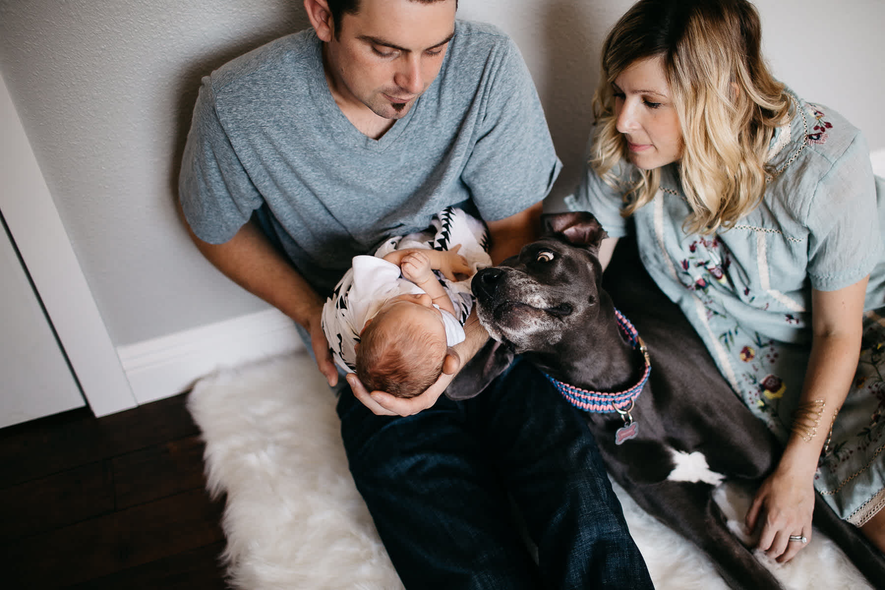 in-home-lifestyle-newborn-with-great-dane-dog-27