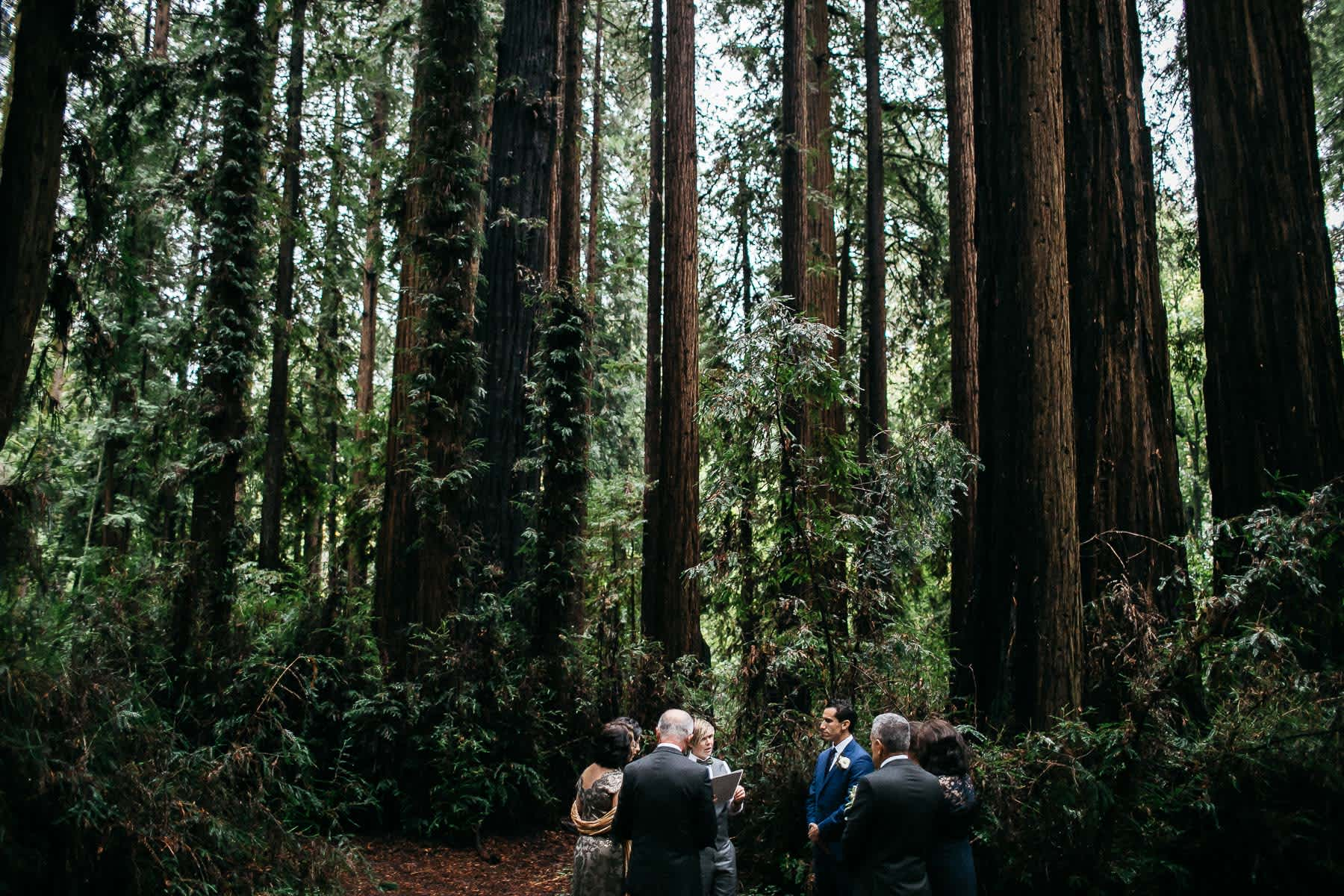 santa-cruz-redwoods-henry-cowell-rainy-elopement-photographer-10