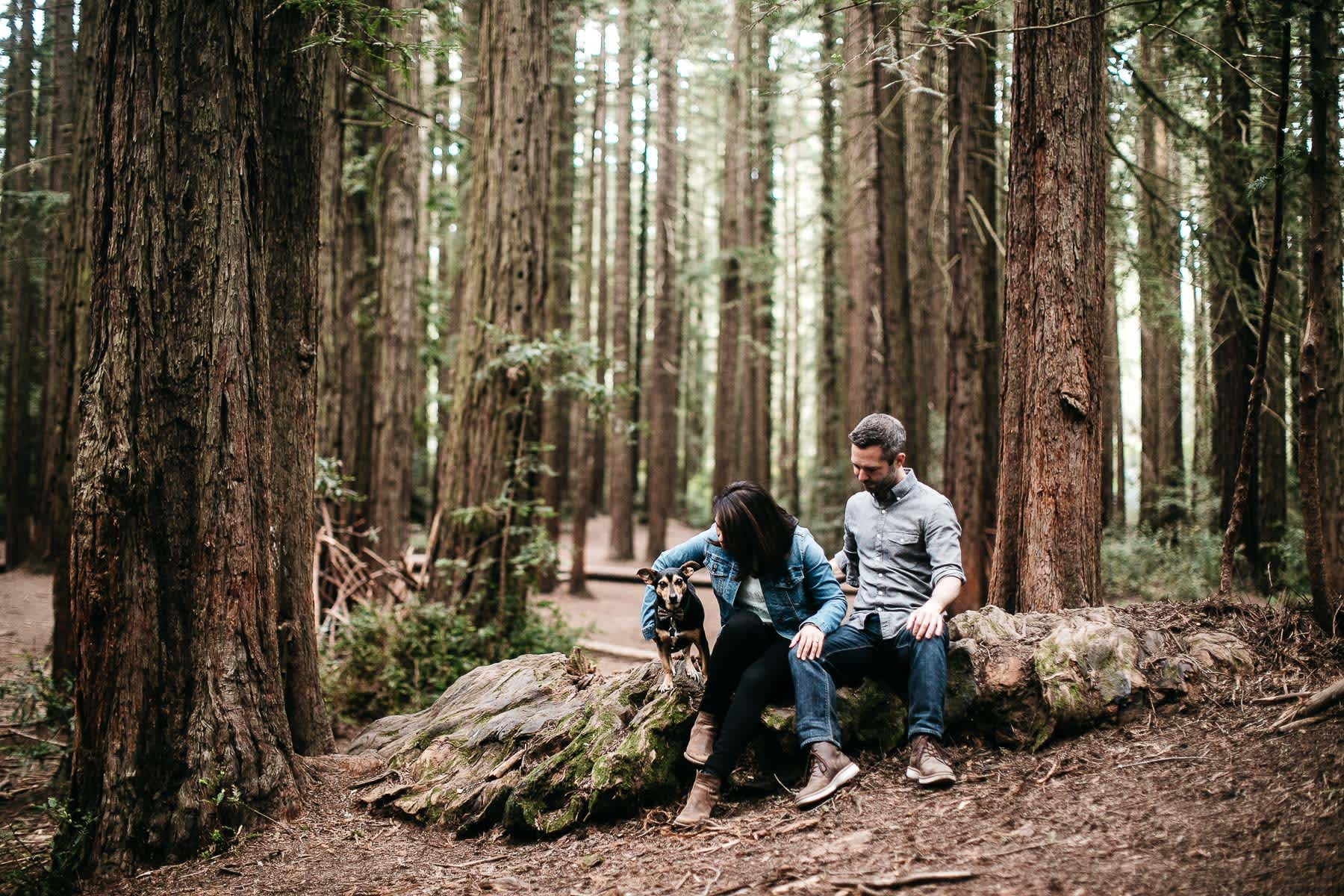 oakland-gloomy-redwood-engagement-session-with-puppy-18