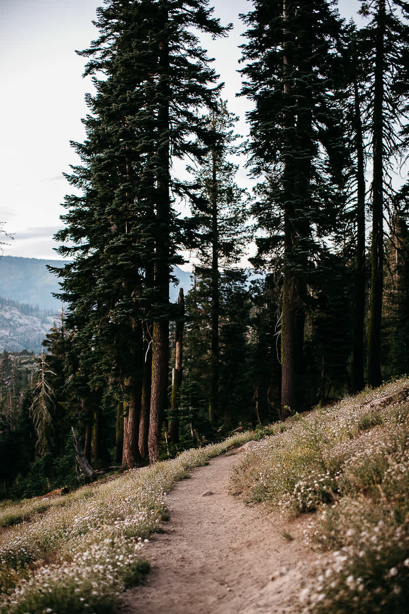 lake-tahoe-forest-donner-sunset-couple-session-34