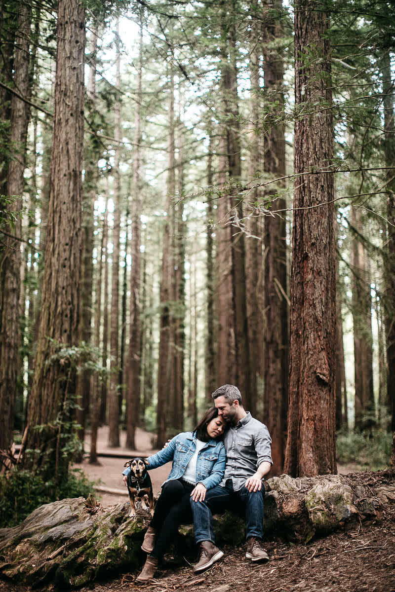 oakland-gloomy-redwood-engagement-session-with-puppy-22