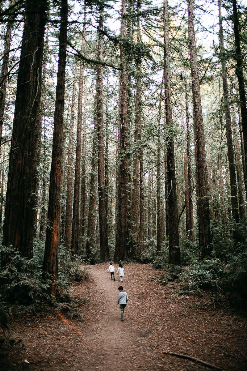 oakland-redwoods-dreamy-big-family-lifestyle-session-38