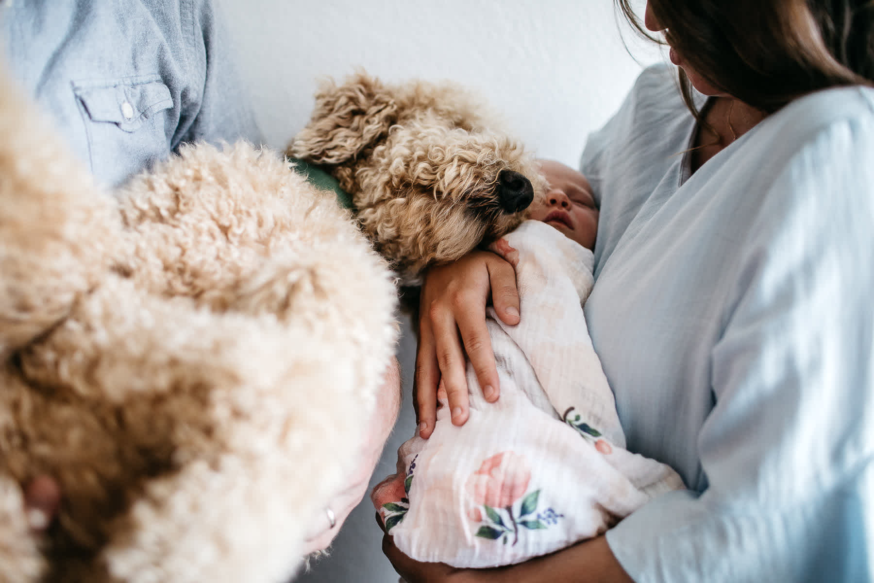 san-francisco-lifestyle-in-home-newborn-with-dog-55