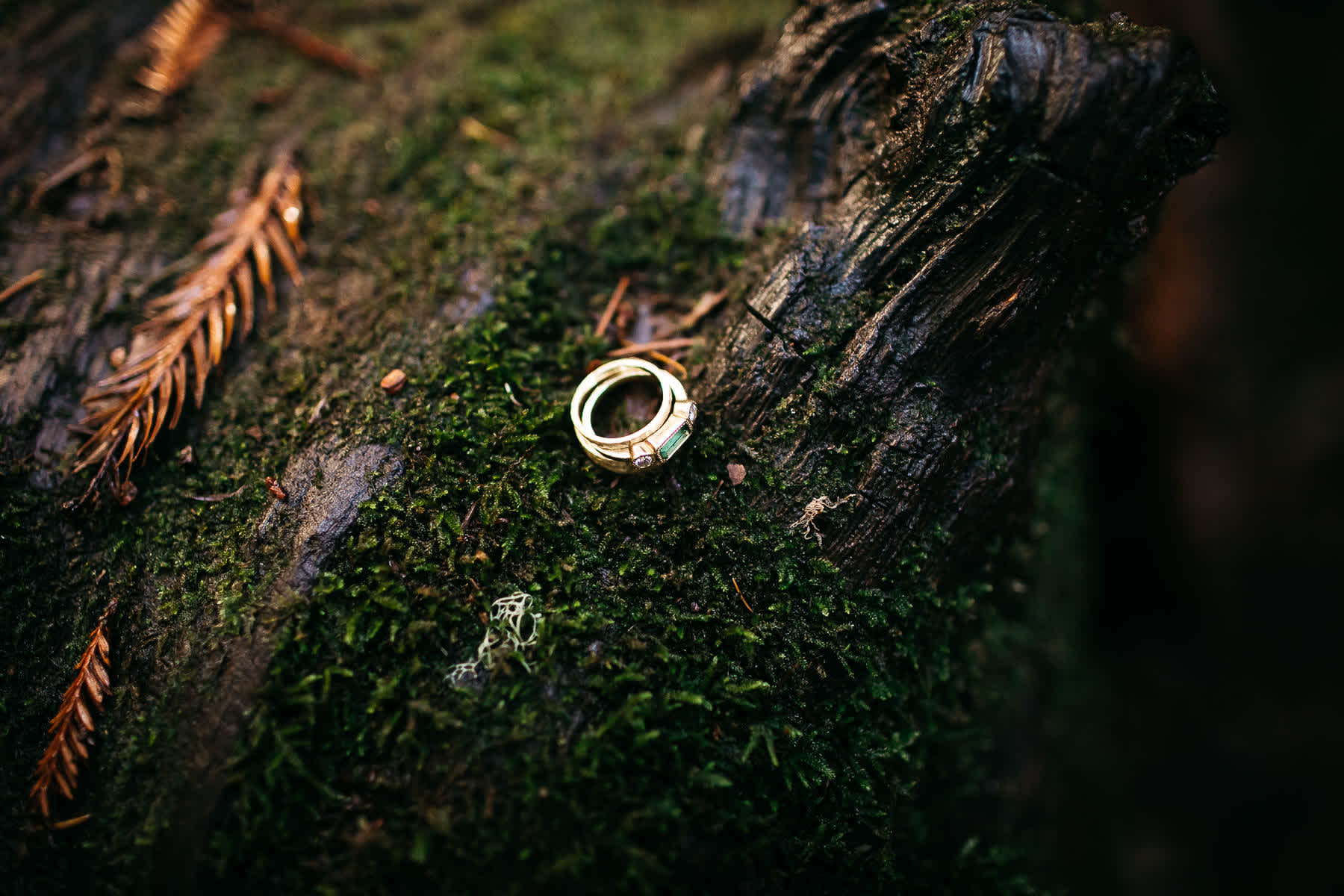santa-cruz-redwoods-henry-cowell-rainy-elopement-photographer-64