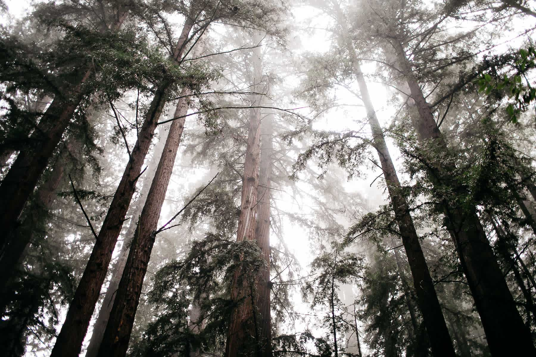 santa-cruz-redwoods-henry-cowell-rainy-elopement-photographer-85