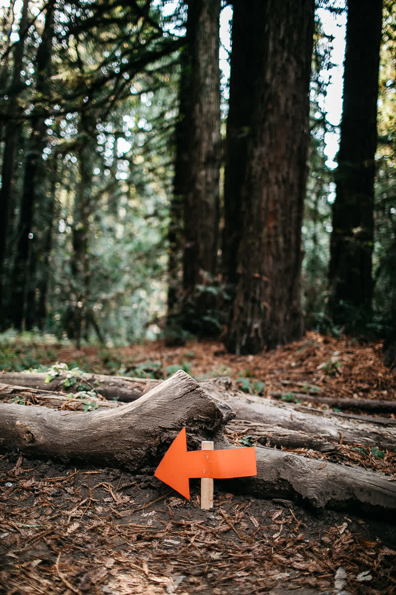oakland-redwoods-summer-wedding-30