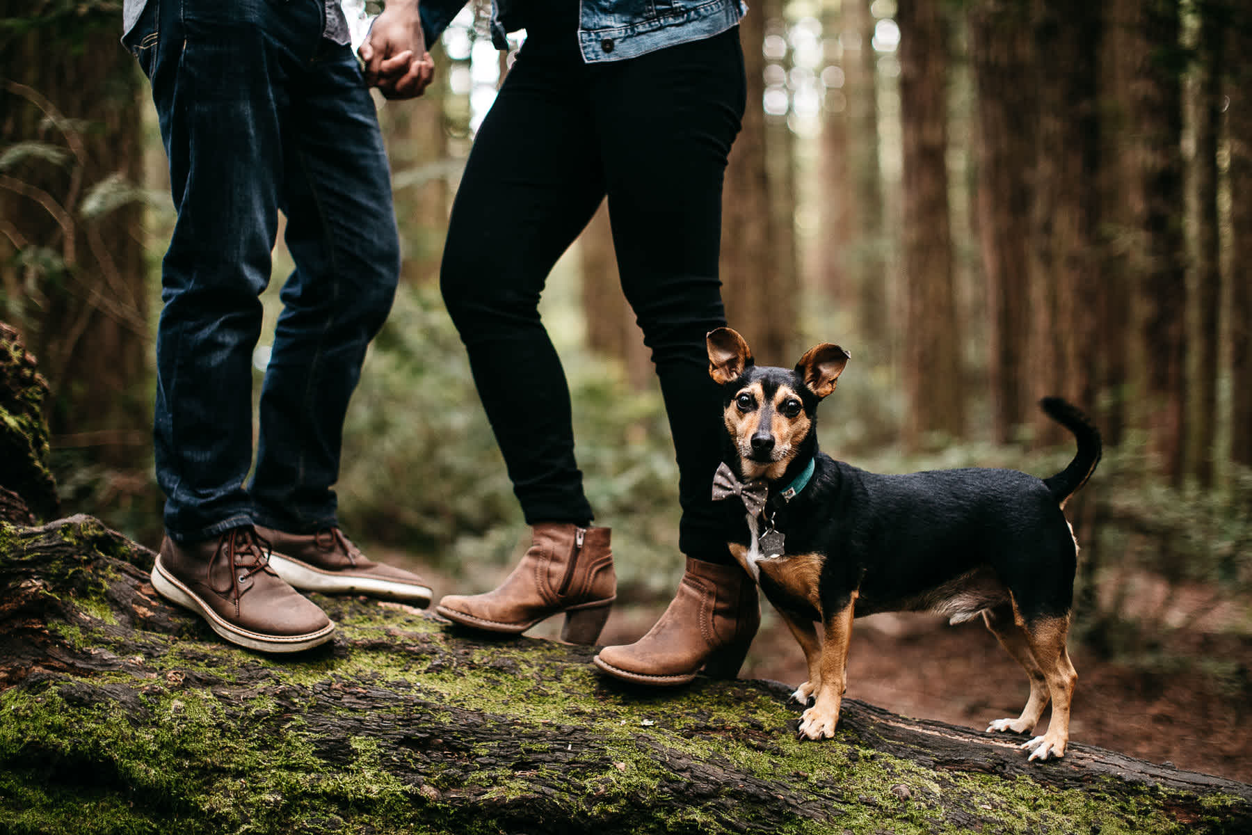 oakland-gloomy-redwood-engagement-session-with-puppy-13