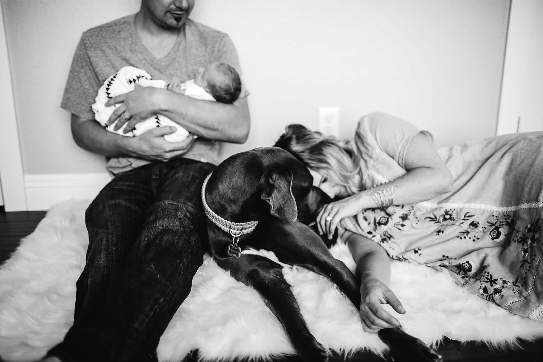 in-home-lifestyle-newborn-with-great-dane-dog-29