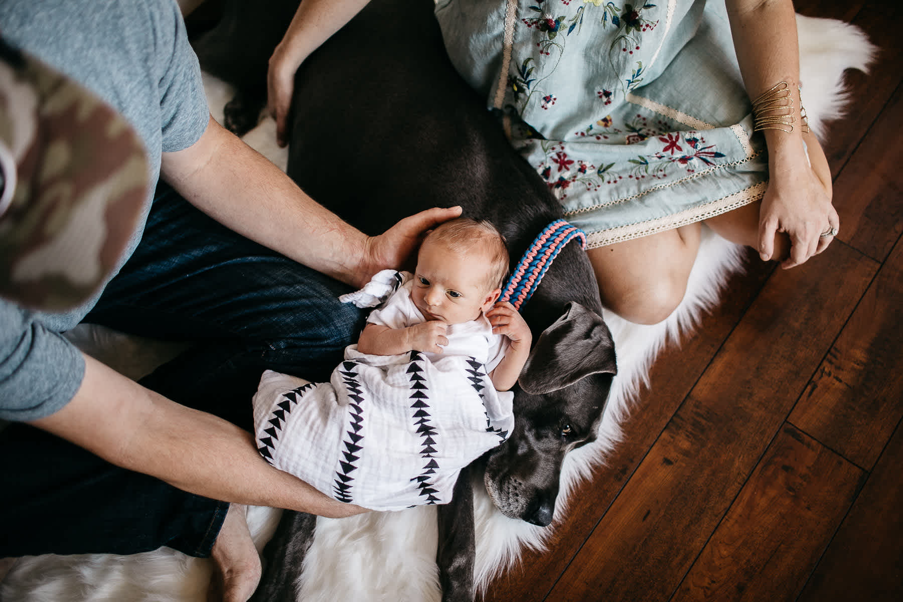 in-home-lifestyle-newborn-with-great-dane-dog-19