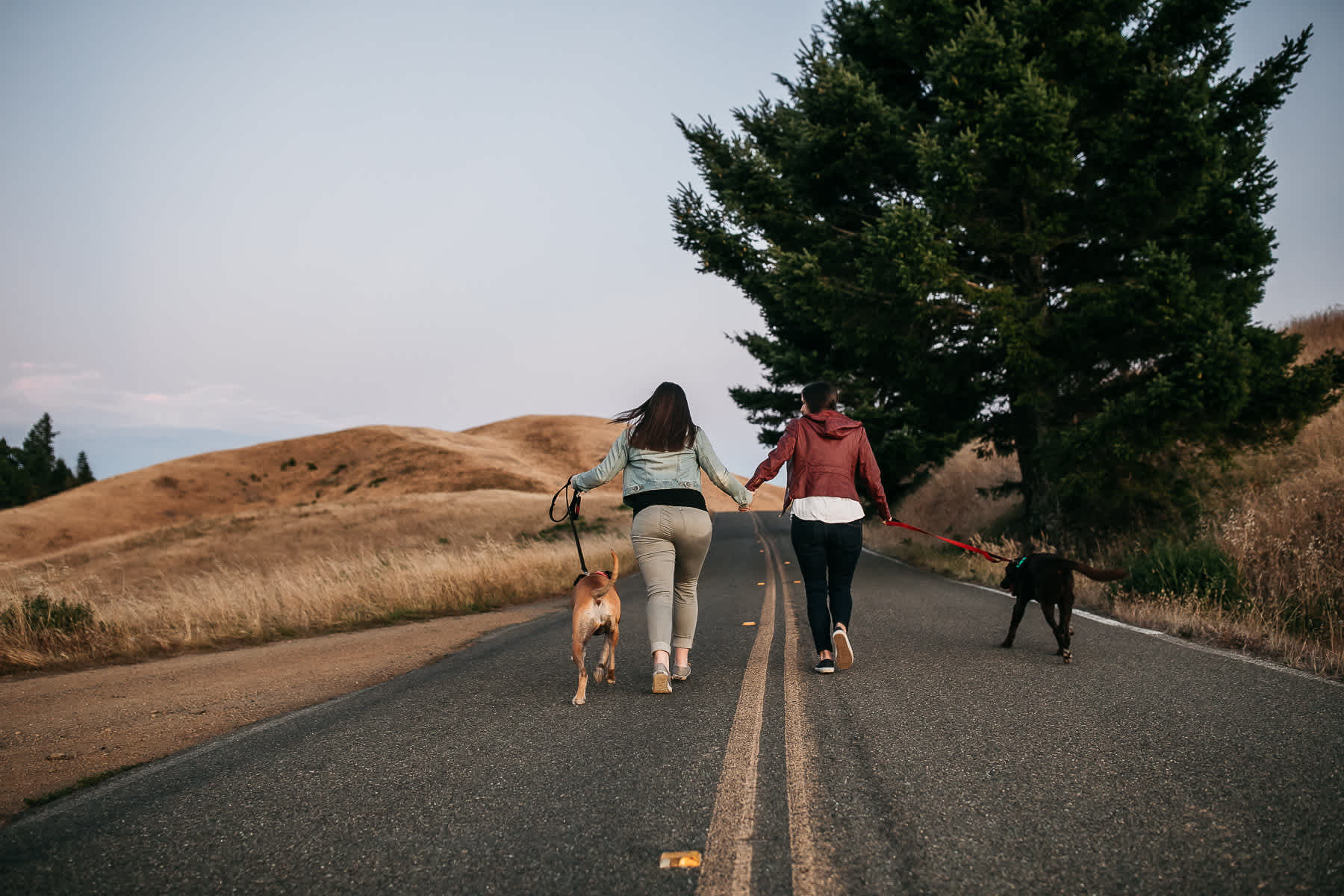 mt-tam-sunset-engagement-session-with-boxer-lab-dogs-44