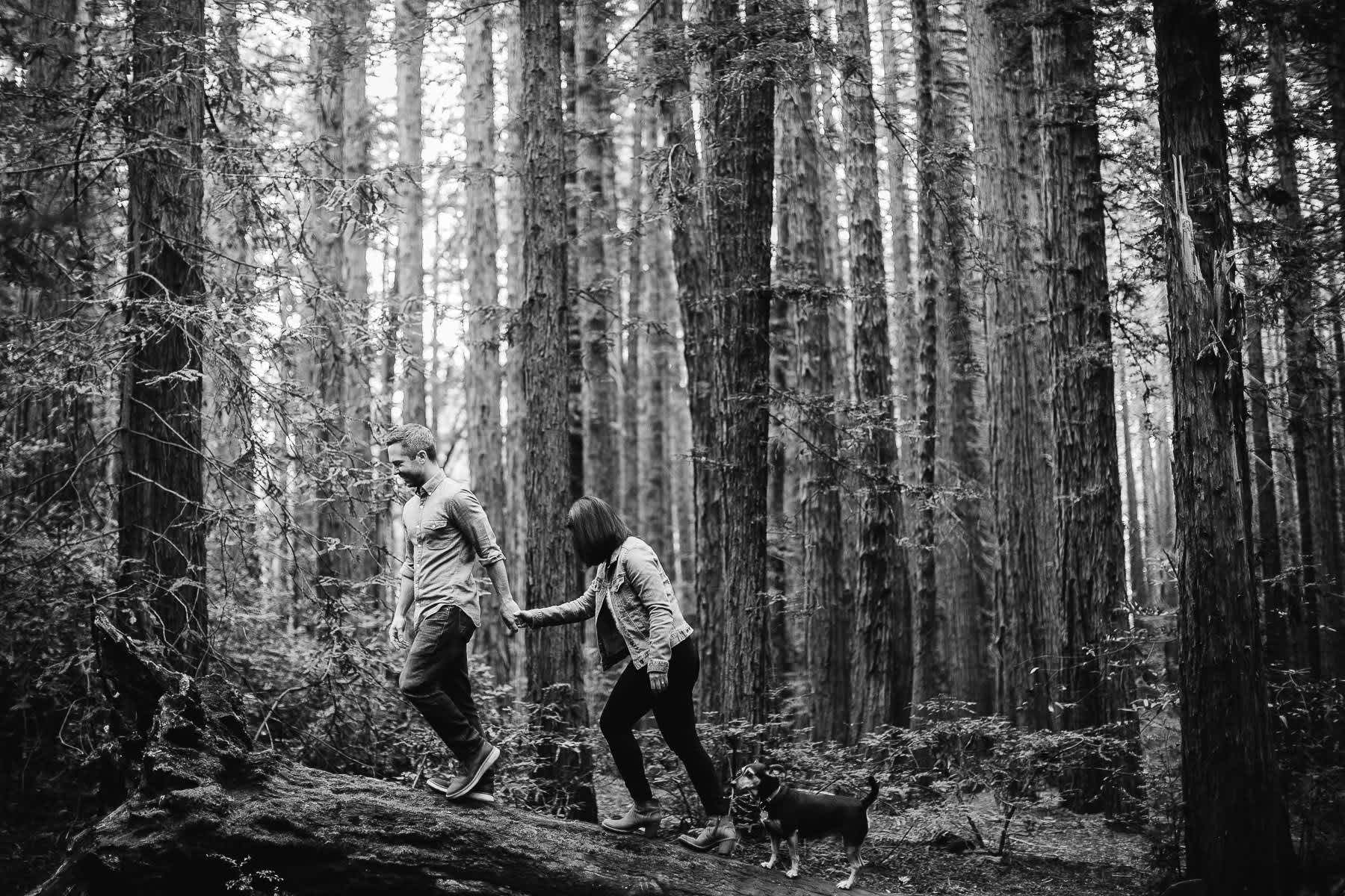 oakland-gloomy-redwood-engagement-session-with-puppy-9