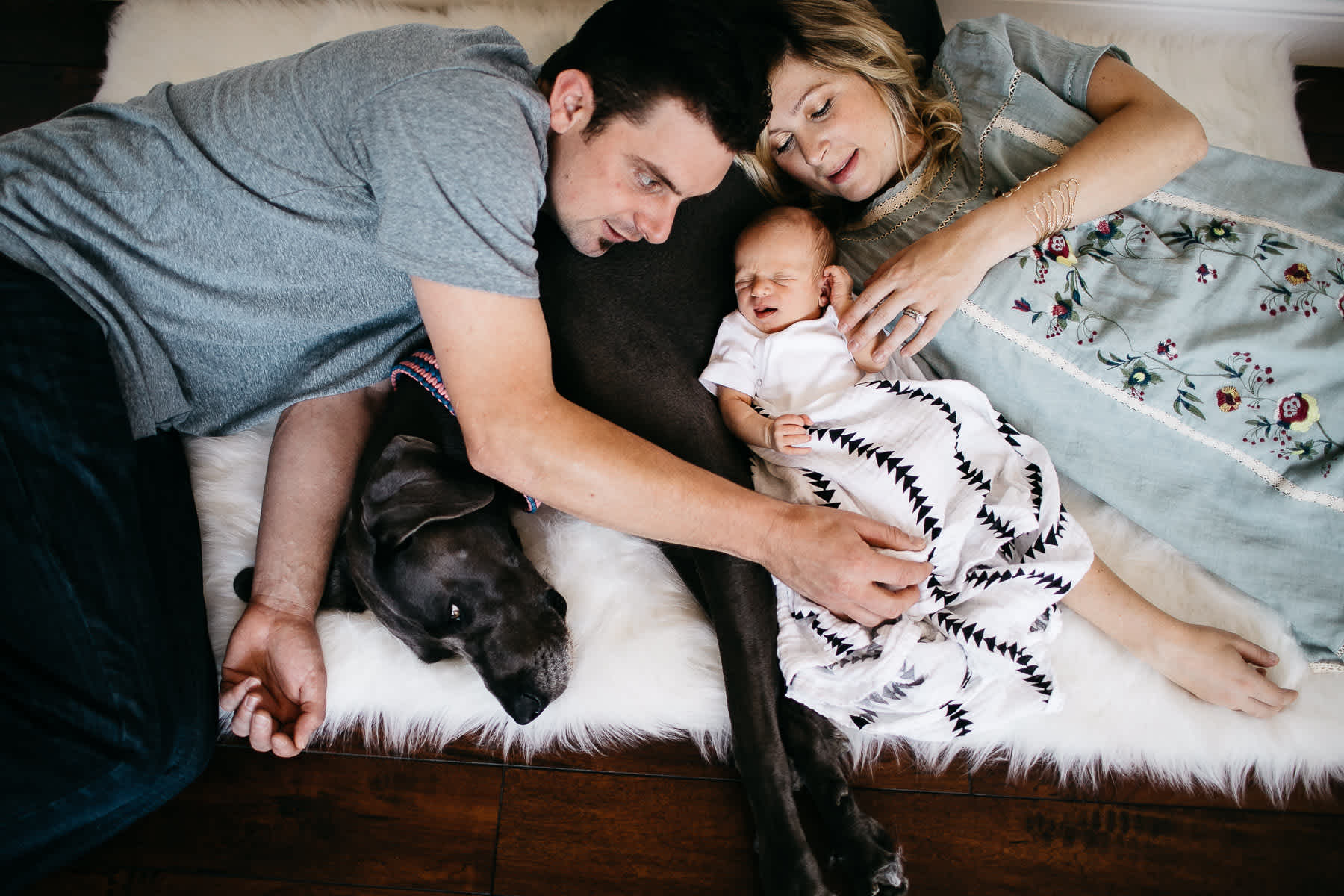 in-home-lifestyle-newborn-with-great-dane-dog-33