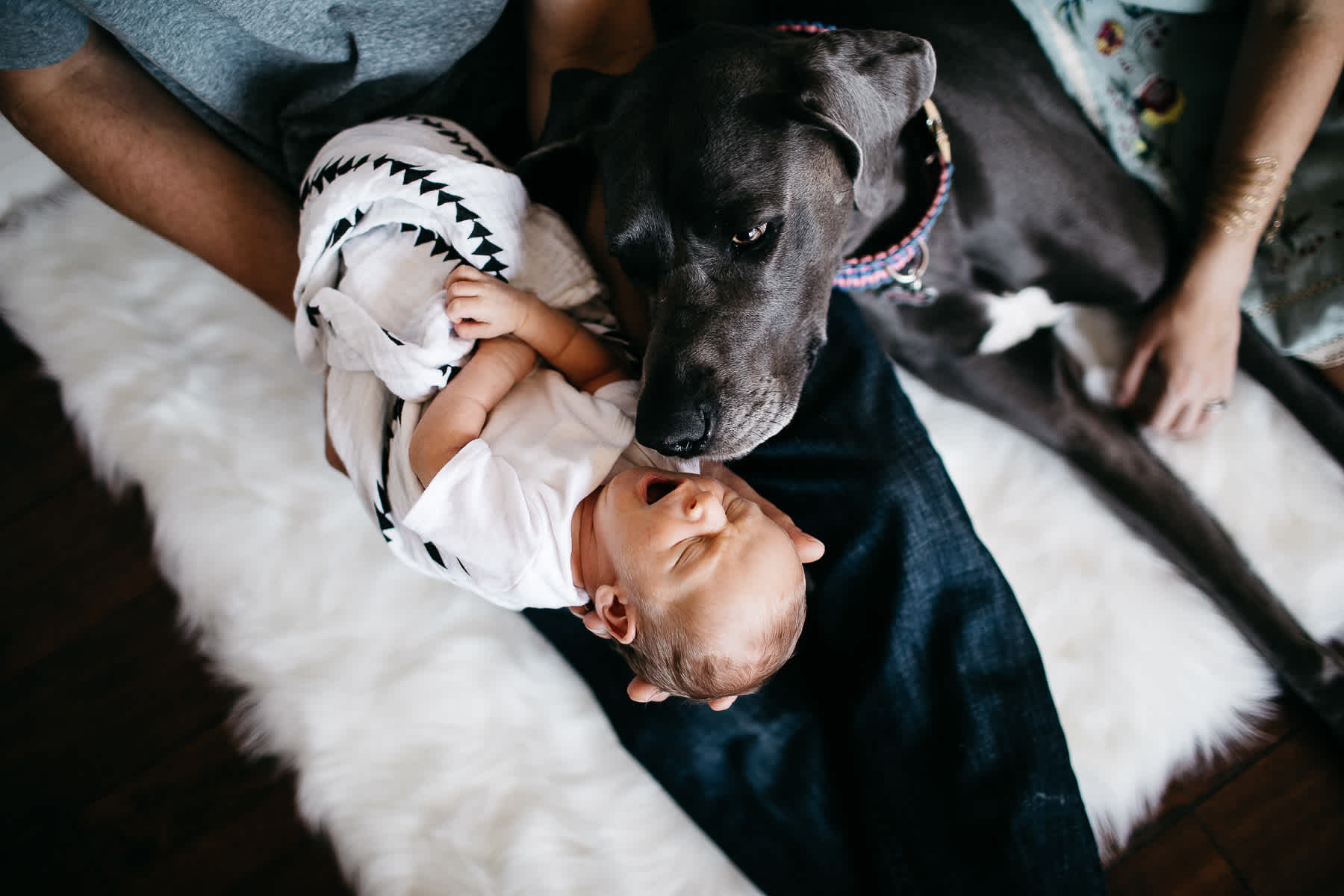 in-home-lifestyle-newborn-with-great-dane-dog-28