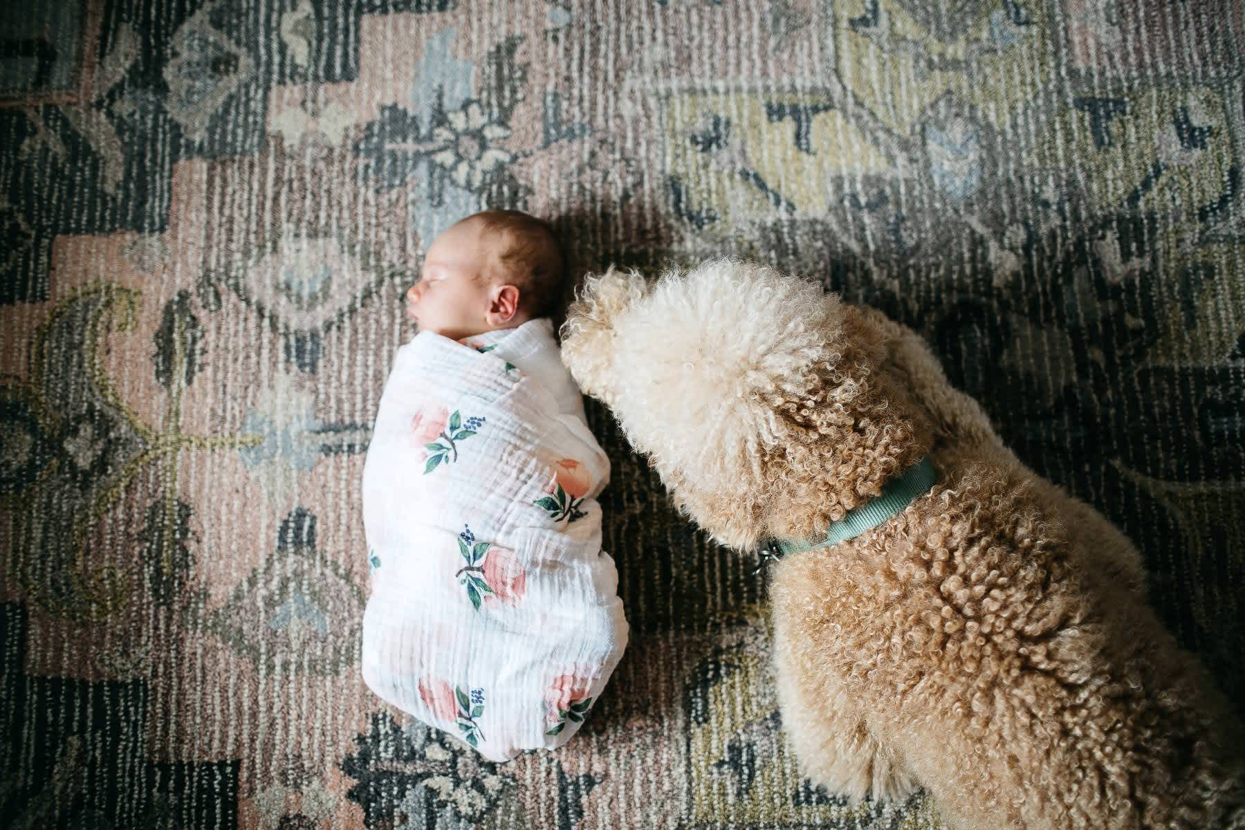san-francisco-lifestyle-in-home-newborn-with-dog-60