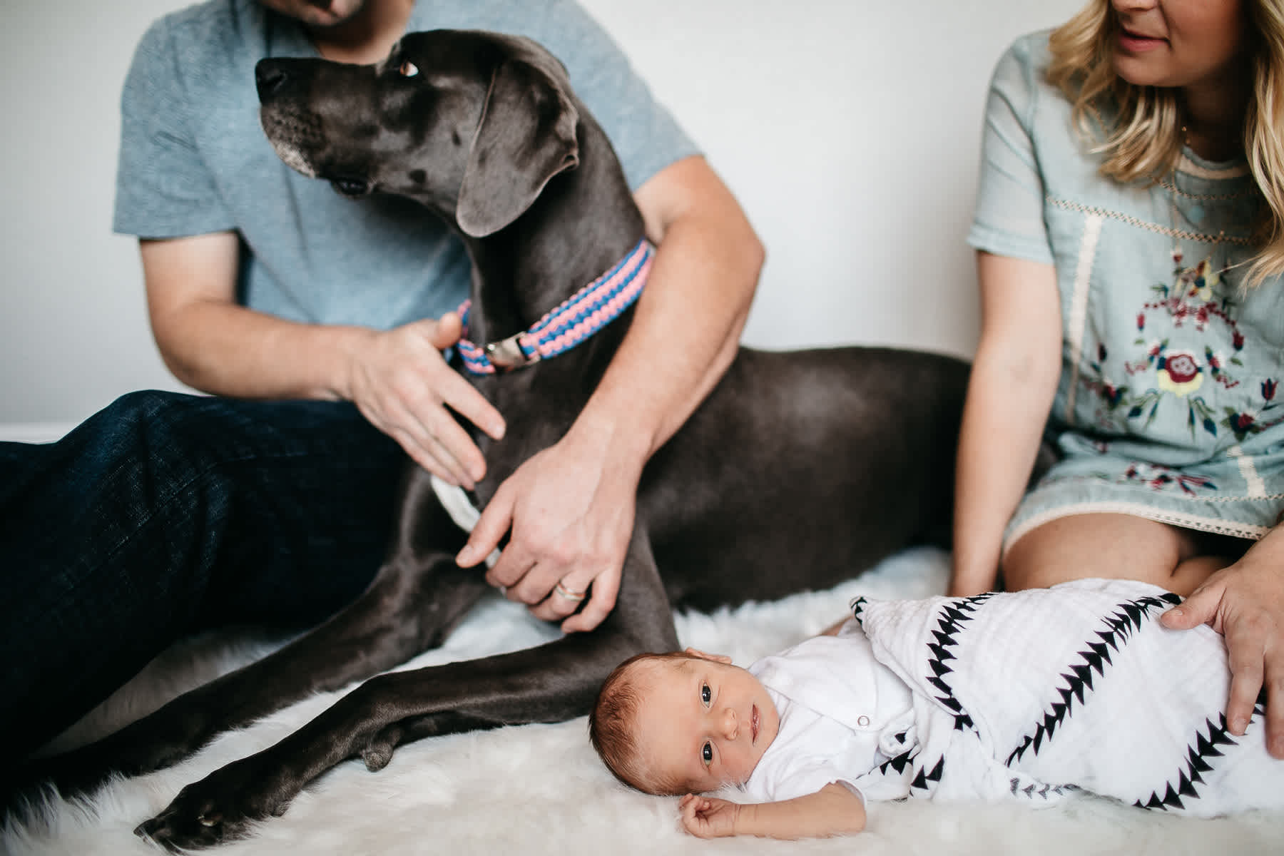 in-home-lifestyle-newborn-with-great-dane-dog-15