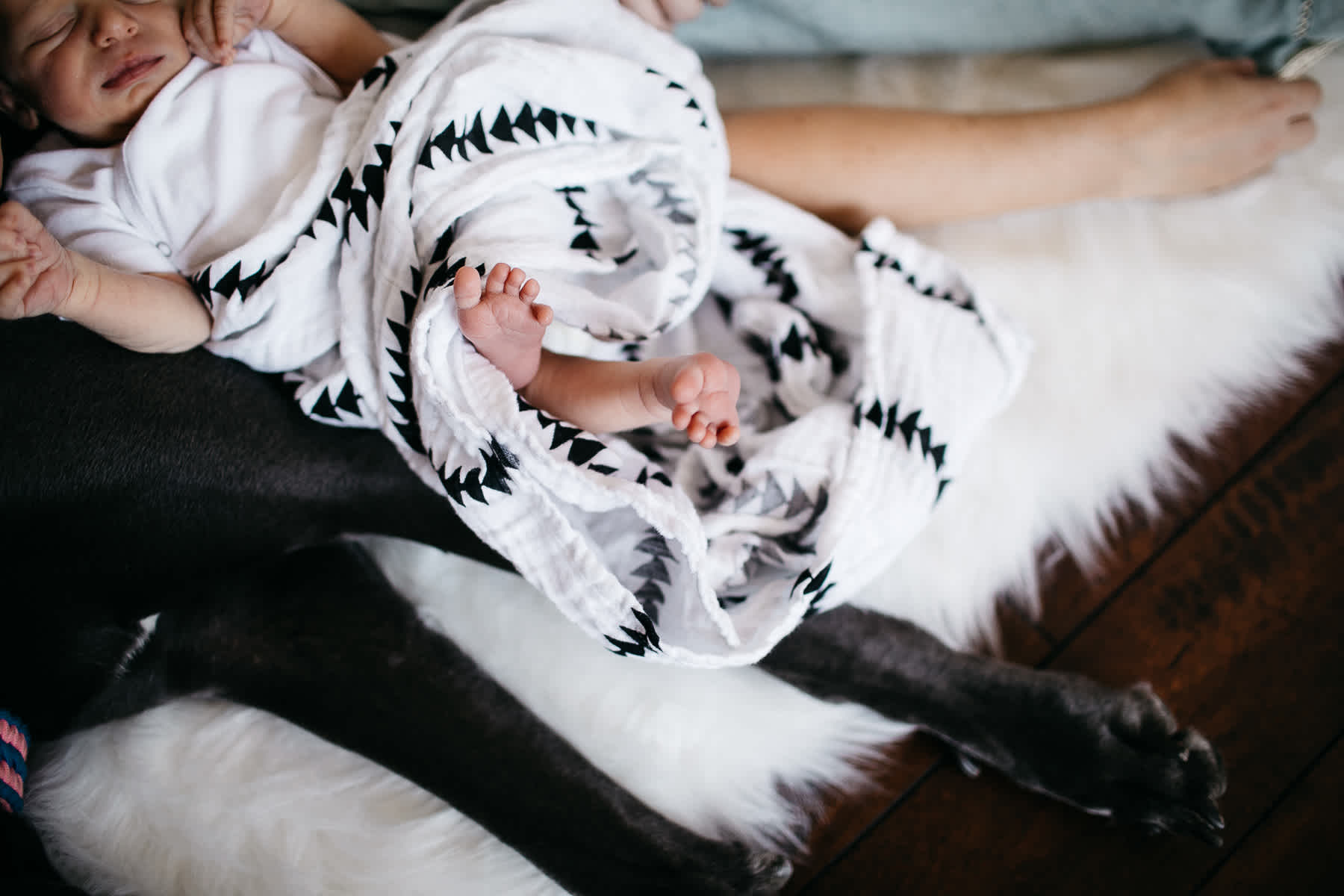 in-home-lifestyle-newborn-with-great-dane-dog-32