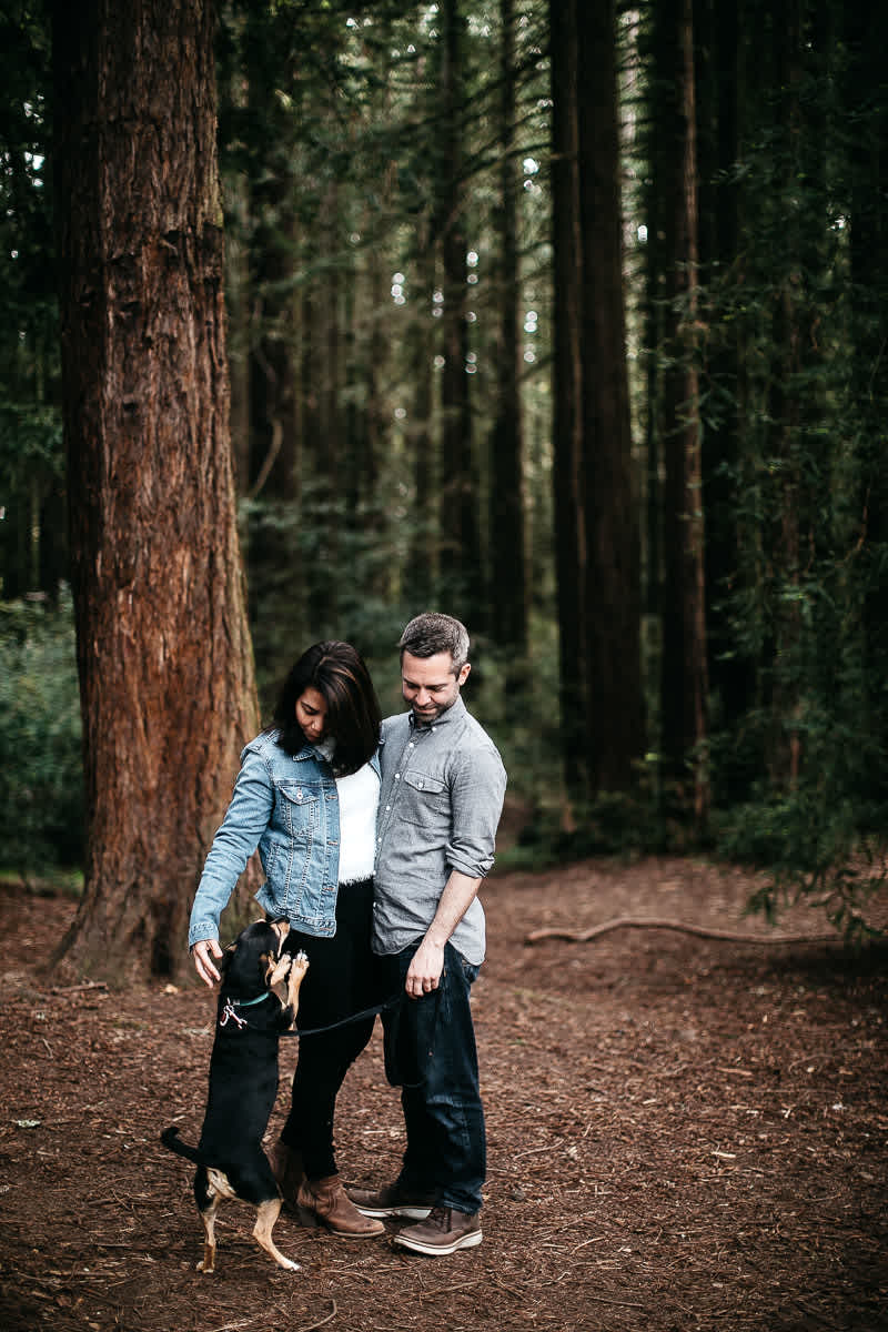 oakland-gloomy-redwood-engagement-session-with-puppy-3