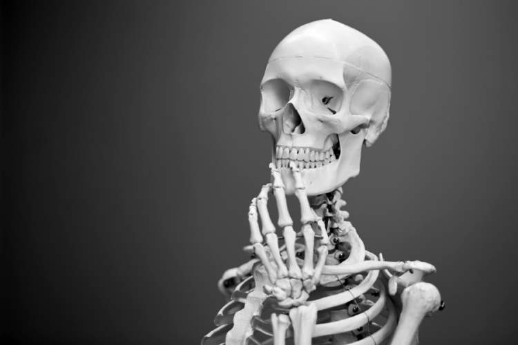 human skeleton posed in thinking position