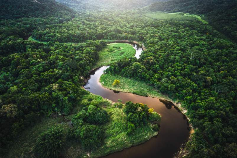 South American rainforest