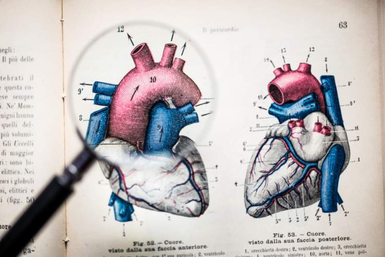 Magnifying glass on antique anatomy book: Heart image