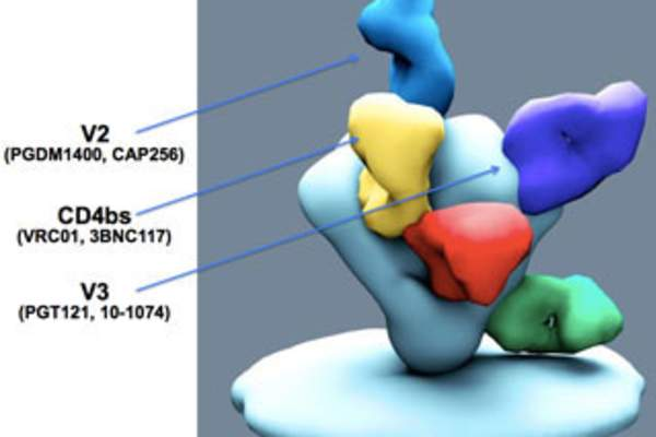 Broadly Neutralizing Antibodies for HIV Prevention