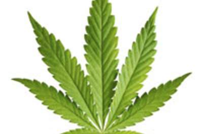 Marijuana Use Tied to Lower Insulin Resistance Risk in HIV/HCV-Coinfected Patients Img