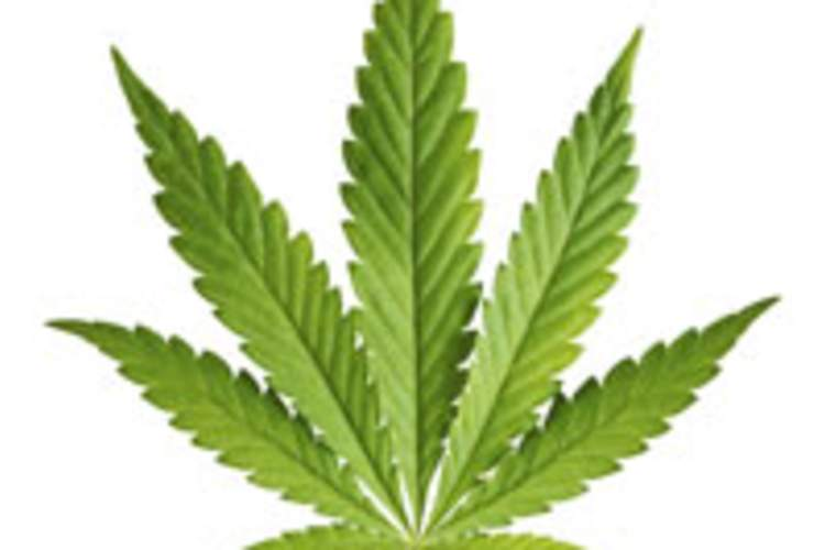 Marijuana May Quell HIV-Related Neuroinflammation via CD16 Expression Img