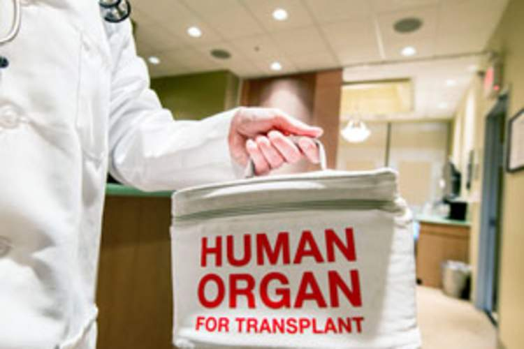 Liver Transplant From HIV-Positive Living Donor to Negative Recipient: Key Ethical Issues Img