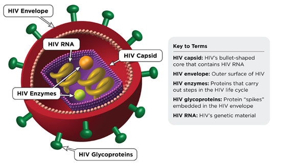 HIV diagram