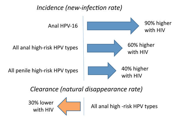 HPV Incidence and Clearance in Gay Men With vs Without HIV