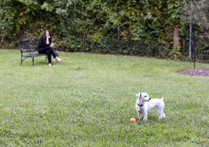 Private dog park onsite pet friendly apartments