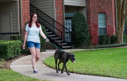 Pet friendly walking trails