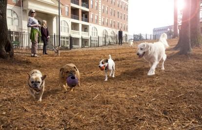 Private onsite dog park