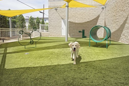 Unleashed bark park with agility equipment