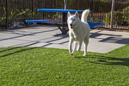 Dog park pet friendly apartment
