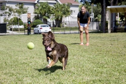Large dog park and play area