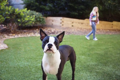 Gated dog park at Camden Brookwood