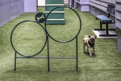 Pet park exercise