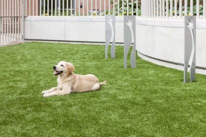 Pet friendly community dog park