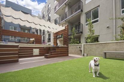 The dog den dog bark with pet washing station