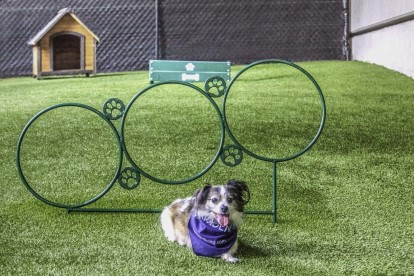 Onsite dog park with agility equipment
