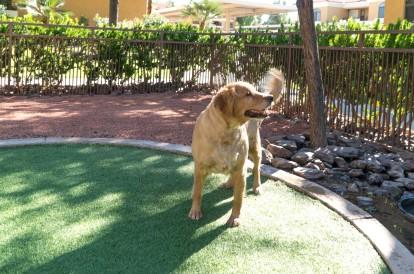 Onsite private dog park